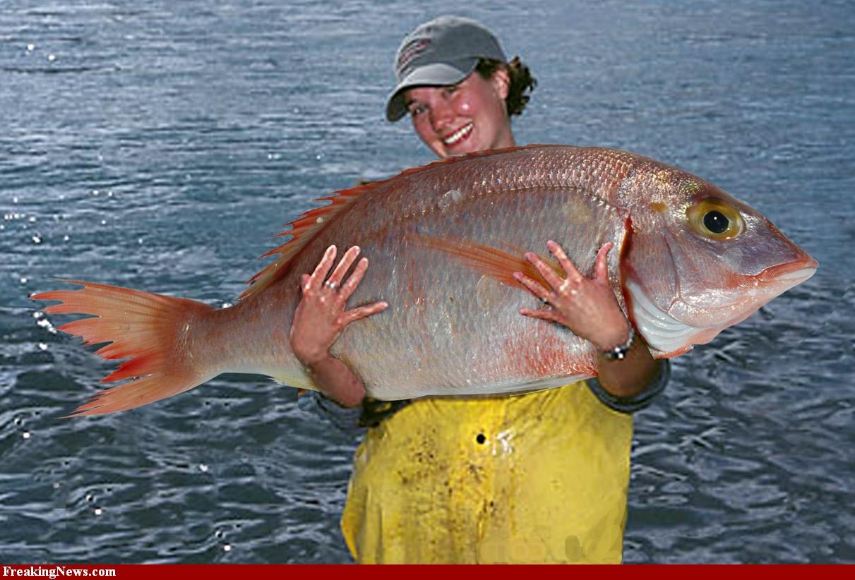 Mancing Mania Umpan Ikan Mas 1