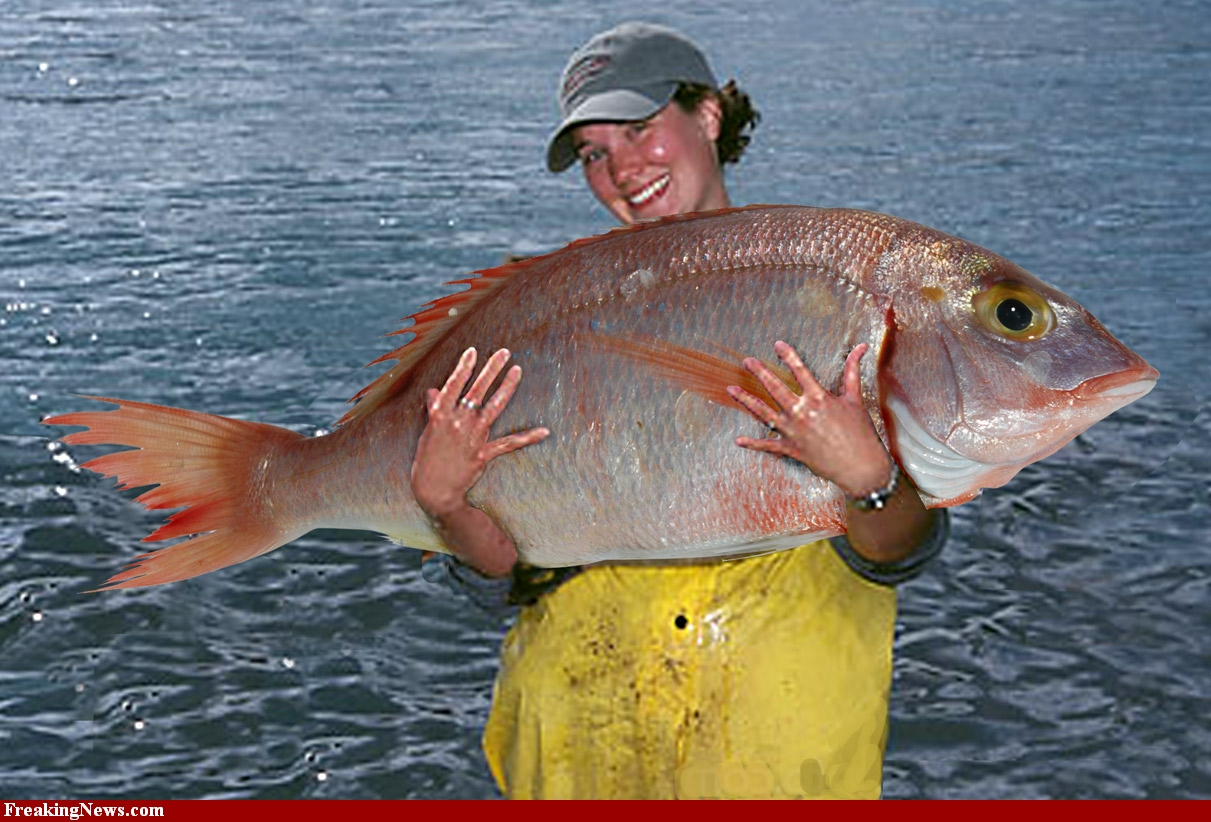 A Really Big Fish Catch