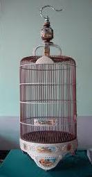 Tips Dasar perawatan burung berkicau ~ Kicau Burung Lok